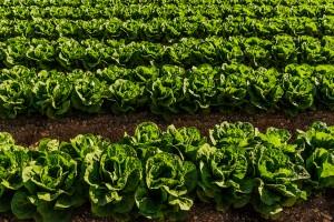 Fotografía corporativa de la empresa hortofrutícola Green First. Cliente: Green First Company.