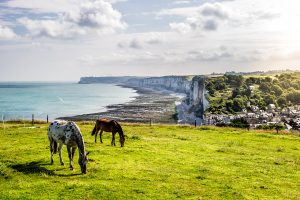 Fotografia de paisaje con caballos pastando en los acantilados de Yport, Normadia (Francia).