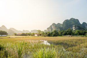 Arrozales en el paisaje karstico de Trang An cerca de Tam Coc en la provincia de Ninh Binh, Vietnam