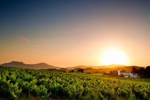 Fotografia de paisaje valenciano de viñedos  en Les Alcusses, conocida como la Toscana Valenciana.