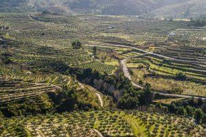 Bancales de almendros y olivos en Planes, provincia de Alicante.