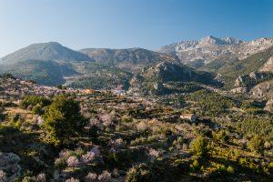Cerezos en flor en Vall de Guadalest, provincia de Alicante.